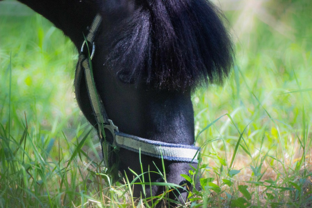 Horse_3-1