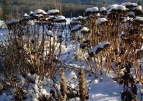 photo of winter garden
