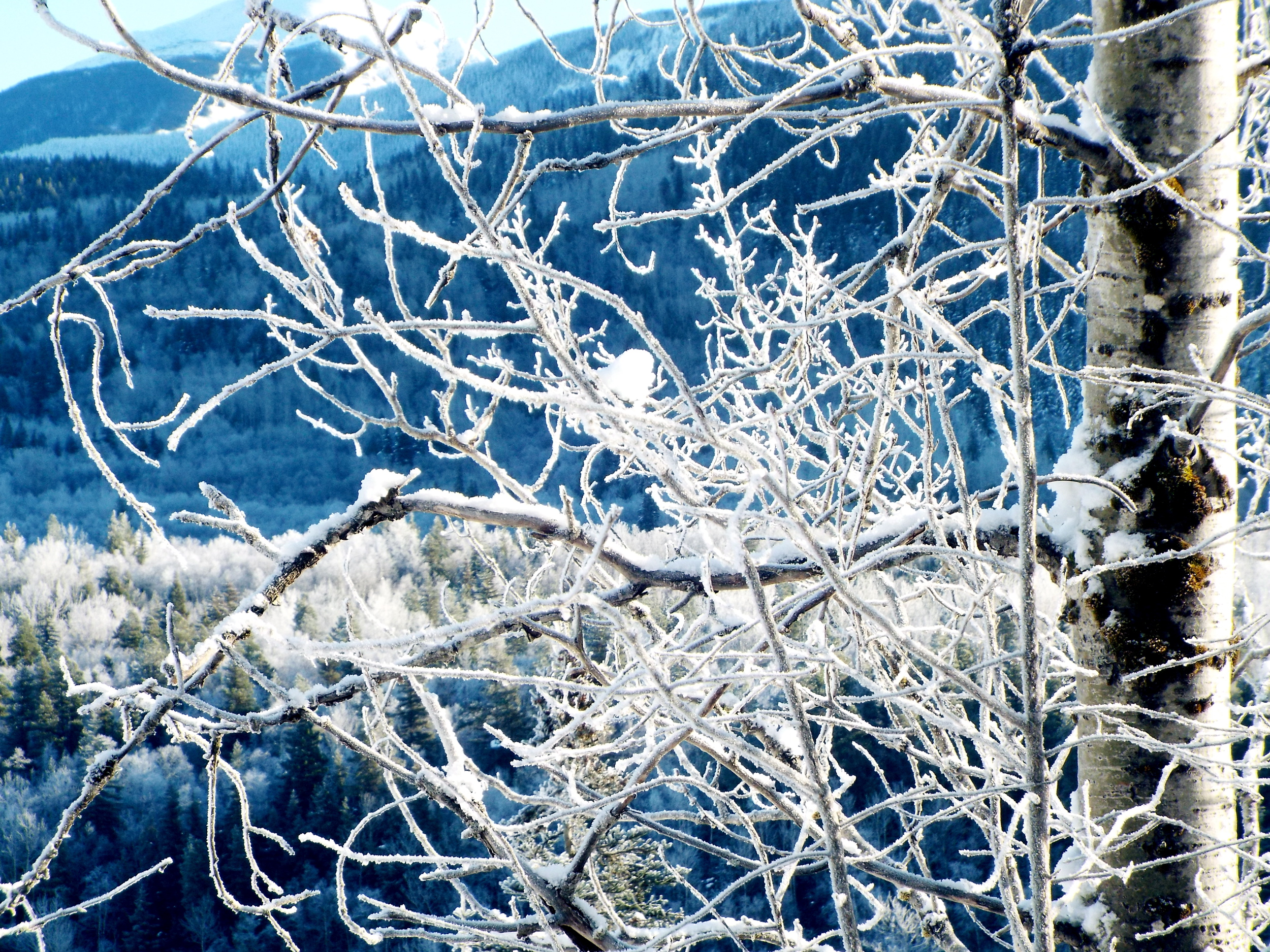 ice_branches