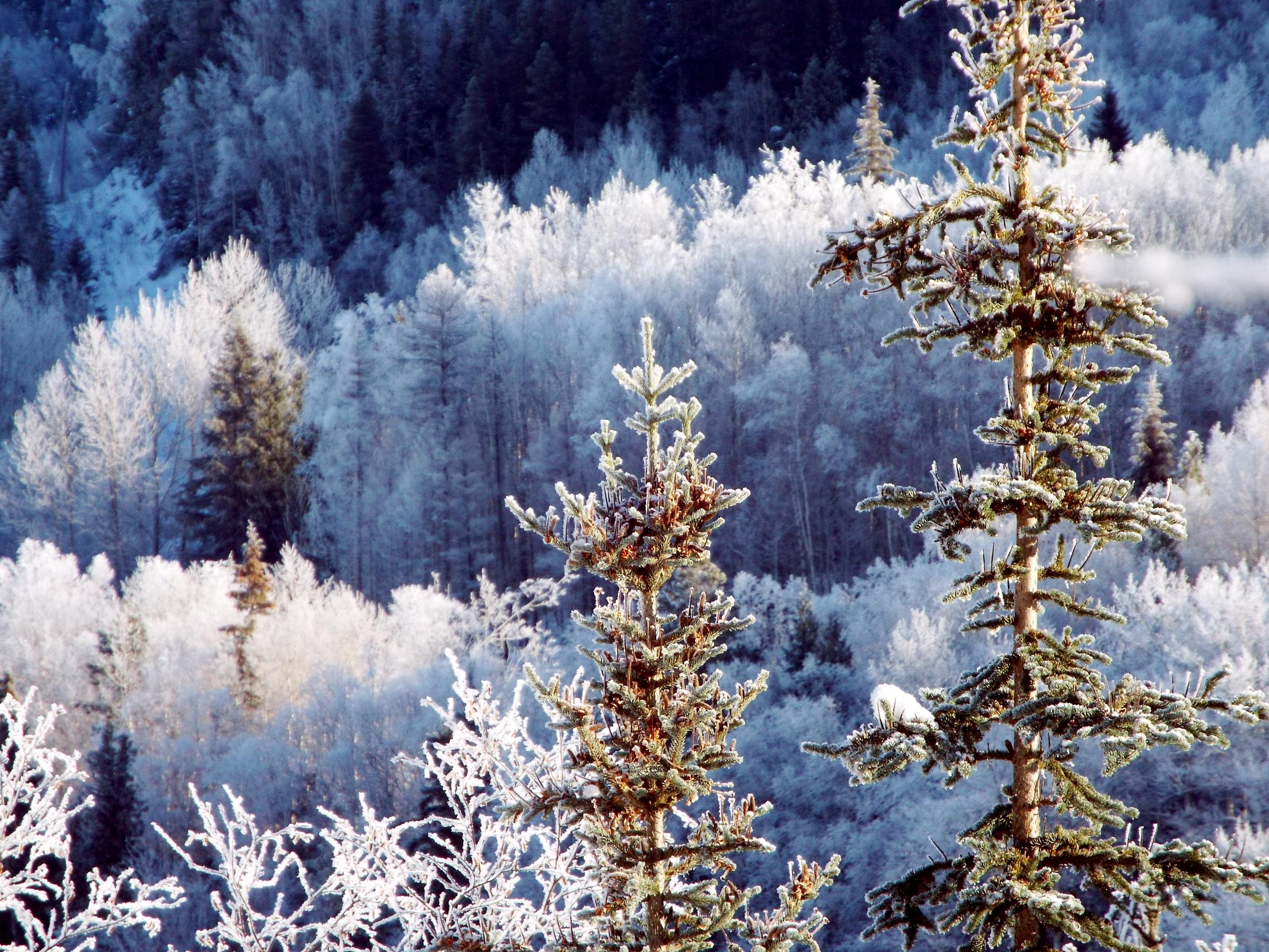 ice_trees