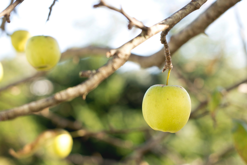 tim-mossholder-apple